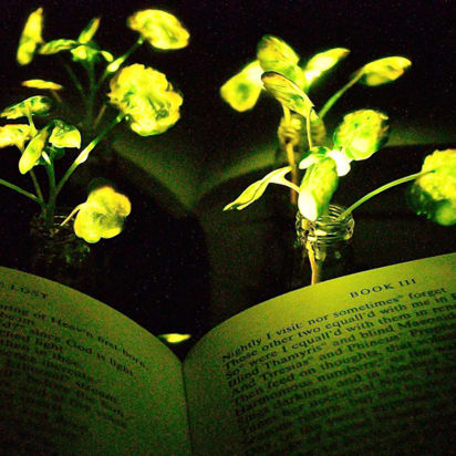 Could glowing plants replace light bulbs? - CNN Style