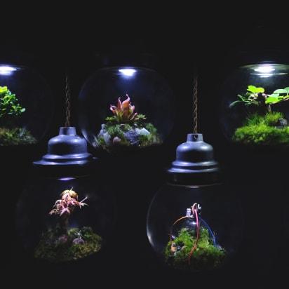 Gardener Builds E Like Terrariums