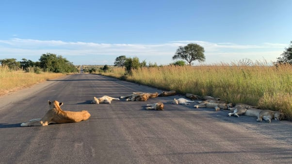 Kruger National Park is currently shut as part of South Africa's nationwide lockdown.