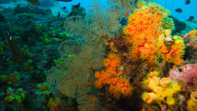 Koh Tang offers clear coastal waters with undisturbed marine life.