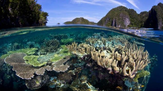Best snorkeling- raja ampat reefs c. Ethan Daniels 02