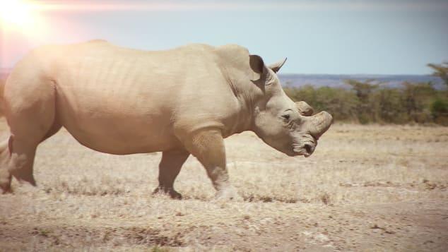 Внутри Африки - Кения Rhinos_00000329