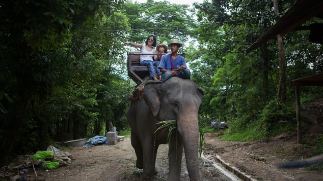 Elephant rides are some of the cruellest attractions out there, says an expert