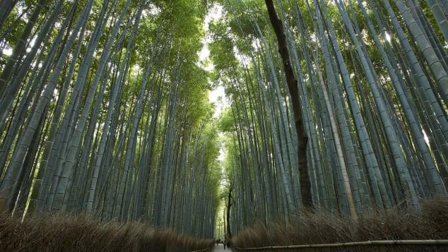 bambooforestinarashiyama_2