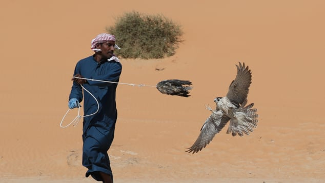 Falconry-getty-8