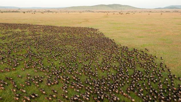 The Great Migration was spectacular this year.