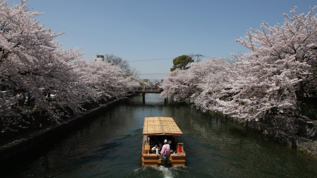 Cherry blossoms could be your reward if you travel to Kyoto in April.
