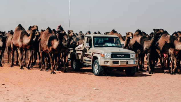 A record 6,120 camels took part in the annual festival in 2018.