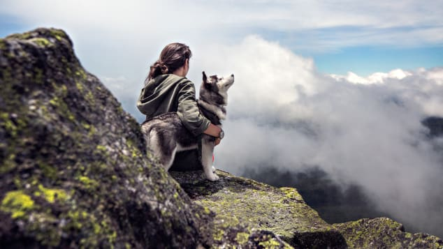 Travel with a dog (1)