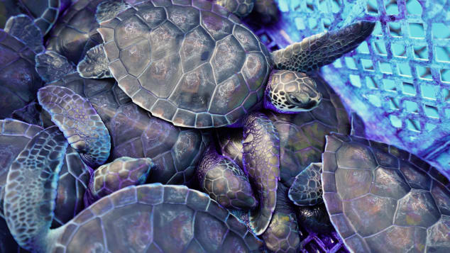 A sea turtle hatchery is one of the few attractions beyond the beach on Cayo Largo.