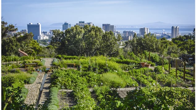 The contrast between the cityscape and the greenery is often striking. Pictured here: Oranjezicht City Farm, Cape Town, South Africa.