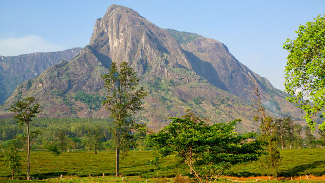 A strenuous trek up Mount Mulanje leads to magnificent views.