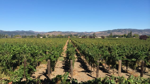 Much of northern California's wine country was unaffected by the autumn wildfires.