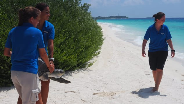 3. Marine Four Seasons Maldives