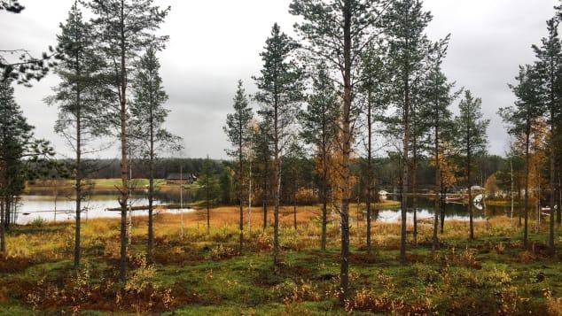 O sereno Wilderness Lodge é o local ideal para fugir de tudo.