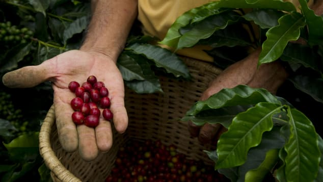 01 things to do colombia - coffee plantation