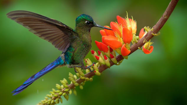 05 things to do colombia - bird watching