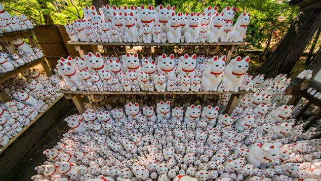 Gotokuji Temple (Tokyo, Japan) cats by Joshua Mellin @joshuamellin jdmellin@gmail.com(13)