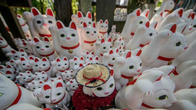 Gotokuji Temple (Tokyo, Japan) cats by Joshua Mellin @joshuamellin jdmellin@gmail.com(14)