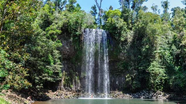 Millaa Millaa Falls is just one of many features to see  in the Atherton Tablelands.