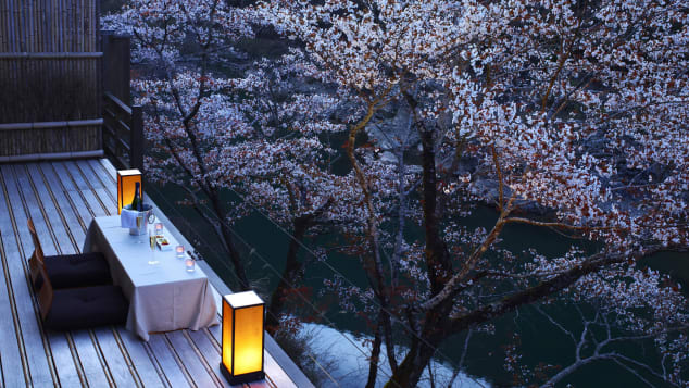 Cherry blossoms provide a delicate canopy for peaceful evenings in Kyoto.