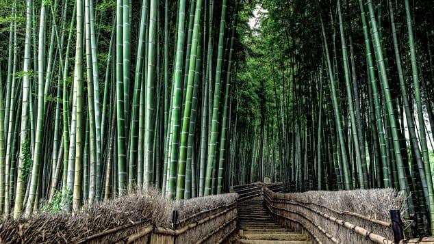24 romantic places_kyoto