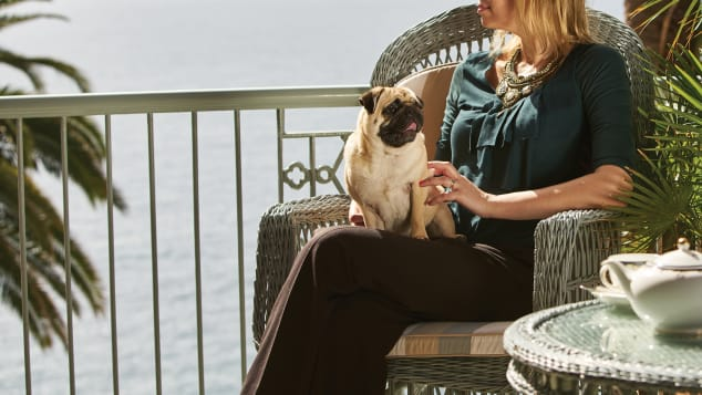 A luxury wash and fluff dry service, calming full body grooming and personal training sessions are just some of the indulgent services available to dogs who stay at Belmond Reid's Palace in Portugal.
