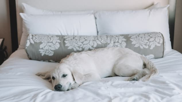 Pets at the Fairmont San Francisco can enjoy their own room service menu featuring chicken or salmon with vegetables and brown rice.