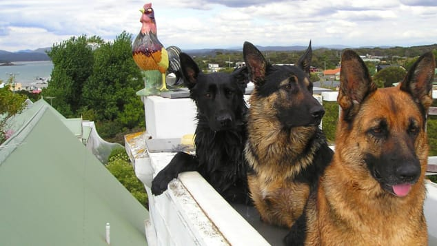 Past guests at Hawley House Tasmania have included dogs, ferrets, rabbits, horses, cats and even chickens.