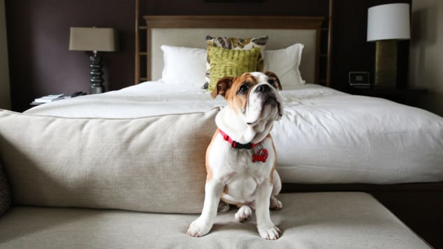 Why leave your pet at home when you can bring them with you? More and more hotels are welcoming dogs, cats and other creatures.