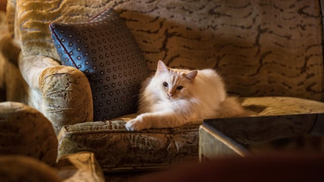 Cats are welcome at Le Bristol Paris and are treated to luxurious surroundings and high-quality food.