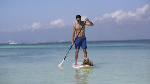 NIZUC welcomes both dogs and cats up to 4.5 kilos and here there's even an option to take your pup out paddleboarding.