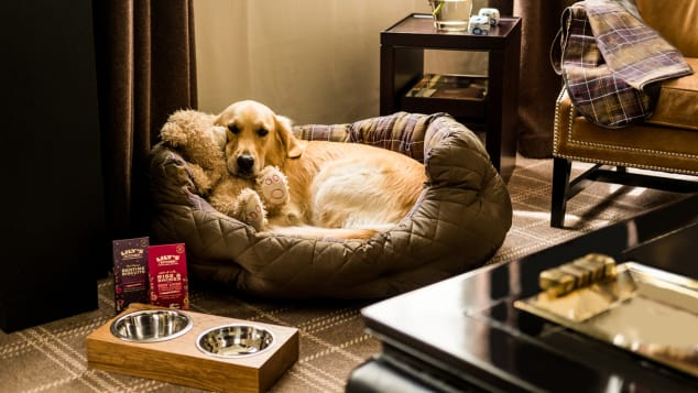 The Rosewood Hotel London wants to pamper your pet; there's even a luxury canine package for folks who want to really treat their pup.
