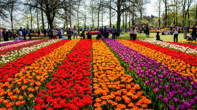 Landgoed Keukenhof gardeners work all year planting seven million bulbs for the show's eight-week run.
