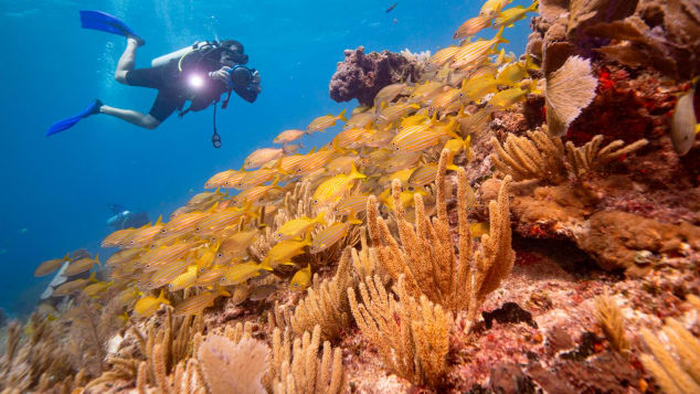 Make sure your sunscreen isn't destroying coral reefs