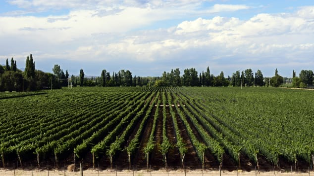 Malbec -- a grape variety used for red wine -- grows easily in this part of Argentina.