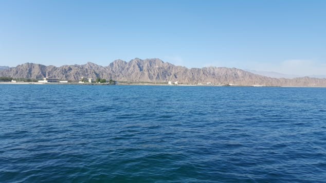 The pristine and warm waters off Dibba Bay provide the perfect environment for oysters to flourish.