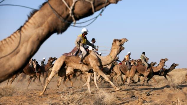 Course de chameaux pendant le Festival du désert à Jaisalmer, Inde.