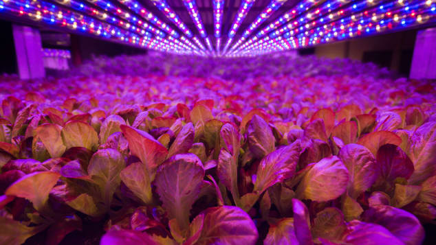 AeroFarms, set in an industrial part of Newark, NJ, claims to be the world's largest vertical farm.