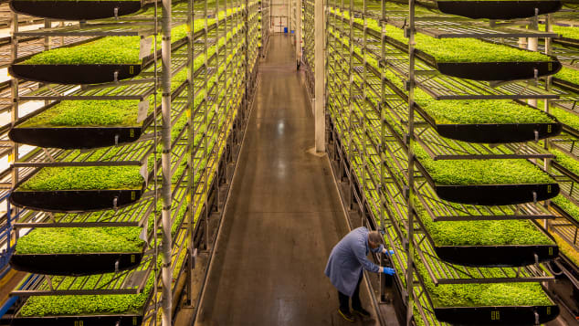 AeroFarms, which began in 2004, isn't new, but it remains pioneering in its agricultural approach.