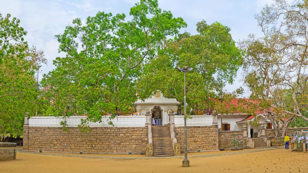 The sacred Bodhi tree at Jaya Sri Maha Bodhi Temple in Anuradhapura, Sri Lanka.
