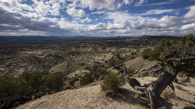 Over the past 20 years, the Kaiparowits Plateau has yielded some of the most remarkable paleontological discoveries in Grand Staircase-Escalante National Monument.