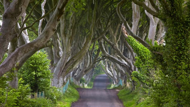 Bregagh Road is known locally as the Dark Hedges.