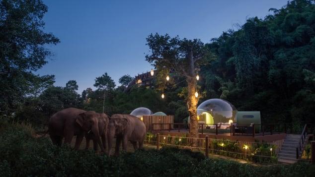 Jungle Bubbles at Dawn(1)