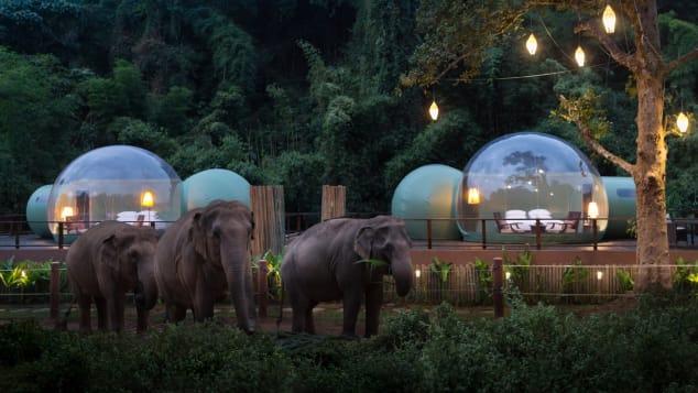 Jungle Bubbles at Dawn(2)