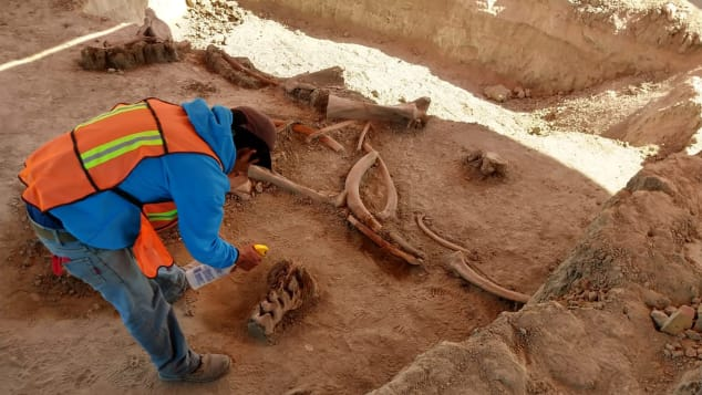 An archaeologist works to uncover mammoth bones found near an airport construction site outside Mexico City.