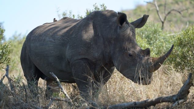 The reserve was previously losing between 10 to 15 rhino per month before the new measures were brought in.