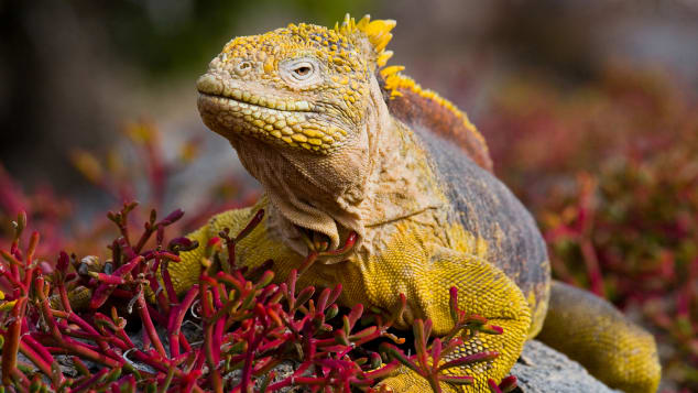 Wildlife is one of the top attractions of the Galapagos Islands.