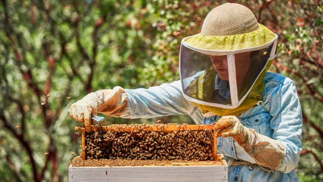 The resort also has partnered with Sonoma County Bee Company to offer guest demonstrations.