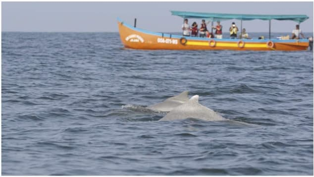 The Terra Conscious Ocean Biodiversity Expereince tour includes dolphin watching.